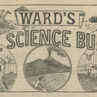 ward-news-home.jpg